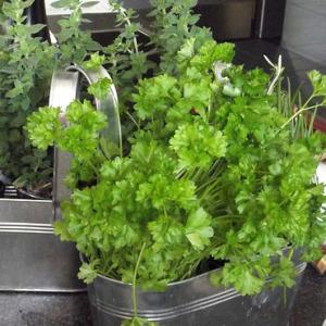 natural-health-sciences-arizona-heart-health-herbs-1