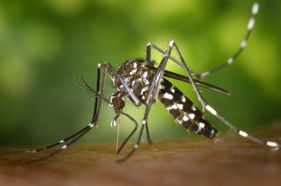 nhsoa-lyme-disease-mosquito